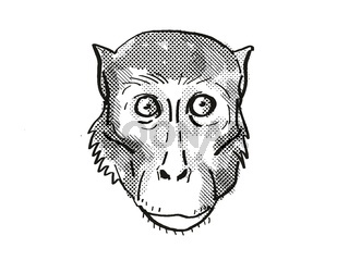 Rhesus Macaque Monkey Cartoon Retro Drawing