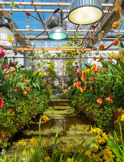 Flowers at the green house. Blooming multi-colored flowers. Houseplants in the orangery. Tropical greenhouse with evergreen flowering plants