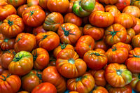 Red tomatoes background. Group of fresh tomatoes.