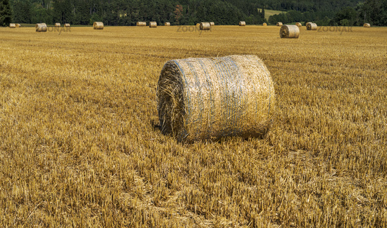 Grainfield field with straw bales