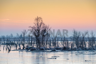 Goldenstedter Moor bei Sonnenaufgang im Winter