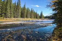 Beneaped creek autumn