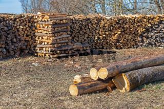 Stapel von frisch gehacktem Brennholz