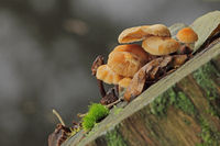 Mushrooms on a tree stump