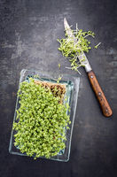 Fresh garden cress germ bud with knife as top view on a black board with copy space