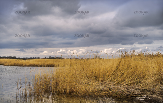 Reed landscape at Vieregge
