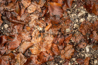 Old autumn leaves lie on the floor with stones