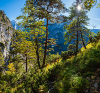 Sunshiny colorful autumn alpine scene. Peaceful rocky mountain view from hiking path near Almsee lake, Upper Austria.