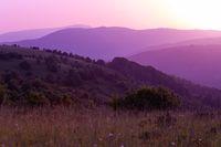 ultra violet purple summer landscape