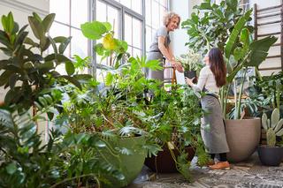 Floristen Team bei der Pflege der Grünpflanzen