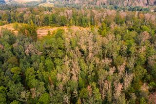 Klimawandel im Harz sterbender Wald