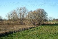 Dyke foreland, Krückau near Elmshorn