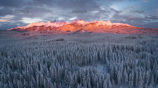 Winter alpine forest at Pokljuka Slovenia covered in snow at dawn