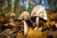 Mushrooms in the mixed forest