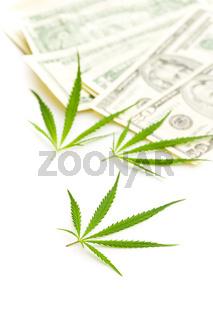 Marijuana cannabis leaves and dollar banknotes.