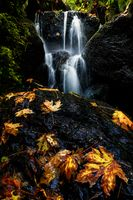 A Small Waterfall in Autumn with Maple Leaves