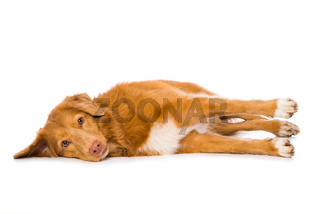 Dog is lying on the side