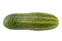 A ridge cucumber, isolated