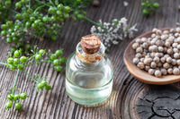 A bottle of coriander essential oil with cilantro plant