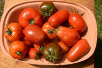 Bowl with different tomatoes