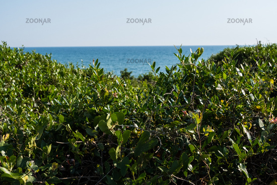 Green dunes with blue sea water background on a summer day.