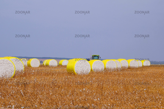 Round bales of freshly harvested cotton wrapped in yellow plastic, in the field in Campo Verde, Mato Grosso, Brazil