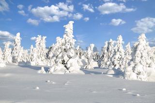 Winterlandschaft auf dem Brocken,Harz,Sachsen-Anhalt,Deutschland