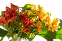 Bouquet of yellow, red and orange flowers