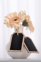 Two gerbera flowers in vase with two text boxes in front of curtain white