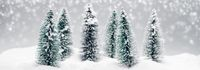 Christmas fir trees at snowfall