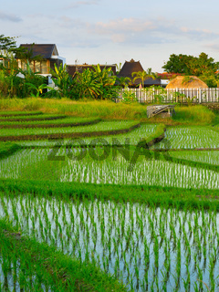 Villa Bali rice fields Indonesia