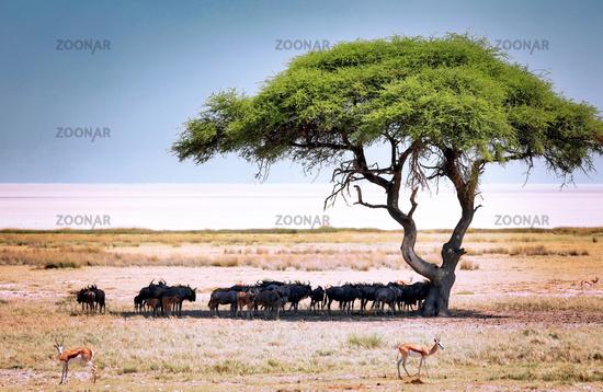 Landscape at Etosha National Park near Etosha pan, Namibia | Landscape at Etosha National Park near Etosha pan, Namibia