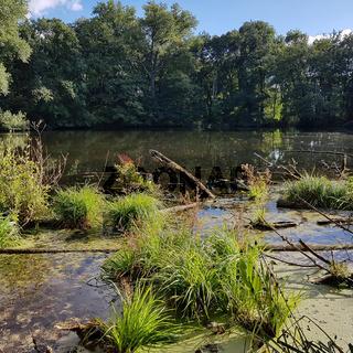Naturschutzgebiet Bogensee im Norden von Berlin