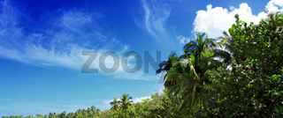 Coconut palm trees on blue sky and sunlight.