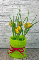 Spring yellow tulips on wooden background