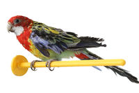 large colorful parrot isolated