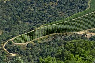 Zungenförmiger Weinberg in der Portweinregion Alto Douro bei Pinhao, Douro Tal, Portugal