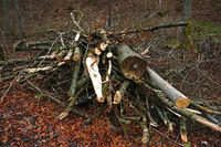 Wood piles in the forest for chipping into wood chips