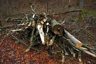 Holzstapel im Wald nach Baumfällarbeiten