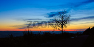 Sunset under the trees. Nature sunset background.