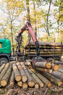 Forwarder mit Forstkran beim Verladen von Langholz