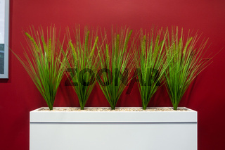 Corporate Office Decoration Green Plants on Red Background Modern Contemporary Interior Style Minimal
