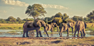 elephants herd at a water pond in Namibia