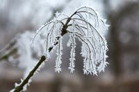 Icy Frosted Branches
