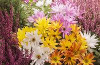 Beautyful autumn flowers