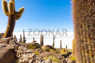 Bolivia Uyuni Incahuasi island cactus and volcano view