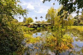Bogota pond and nature in botanical garden