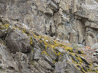 Slate - Surface of a cliff, Harz Mountains, Germany