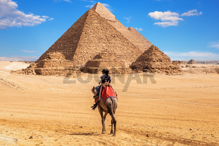 Egyptians on camels near the complex of Giza Pyramids, Egypt