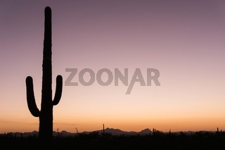 desert sunset with Saguaro cactus in the foreground
